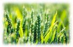 英国在植物、育种和土壤技术的进步