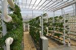 2014第五届亚洲果蔬种植及加工技术展览会
