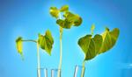 4th Plant Genomics Congress USA