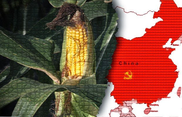 China approves two more GMO crops for import, DuPont disappointed