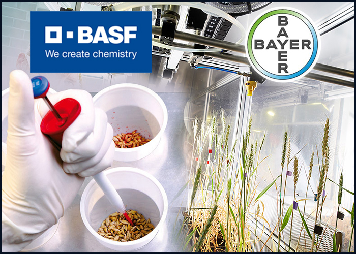 BASF is close to acquire Bayer′s vegetable seed business