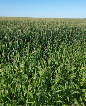 Azotic固氮技术进入美国市场 可减少氮肥使用高达50%
