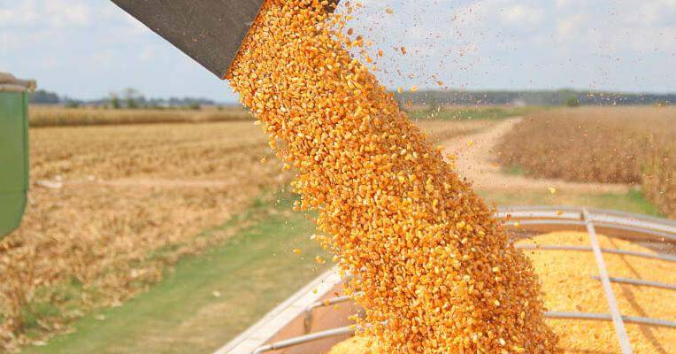 Short-stature corn on the way from Bayer CropScience