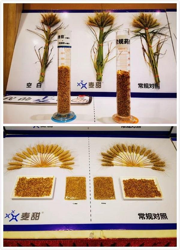 先正达将再添小麦赤霉病防治新利器麦甜®(氟唑菌酰羟胺)
