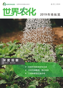Chinese issue of 2019 Market Insight