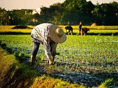 Current Agricultural Chemical Trends in Philippines