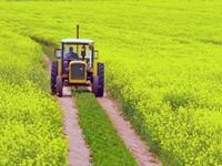 Fall of cotton area influences Australian crop forecast