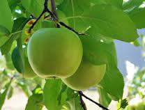 Arysta LifeSciences licenses soil biostimulant