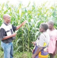 Monsanto introduces new maize variety DKC 9053
