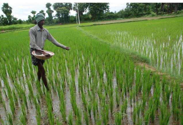 Govt likely to slash P&K fertiliser subsidy by Rs 2,000-2,700