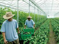 有机农药 - 有机农业的重要组成部分