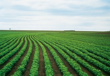 Bayer CropScience and Monsanto Enter into Cross-Licensing Agreements