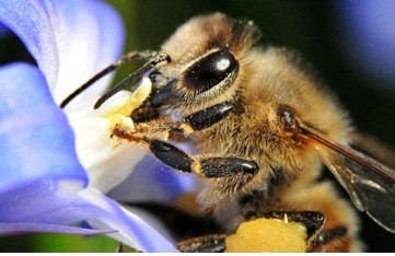 US rejects EU claim of insecticide as prime reason for bee colony collapse