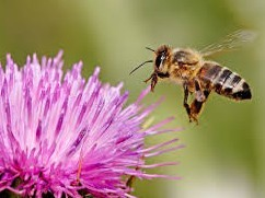 European Commission confirms December 1 neonicotinoid restrictions