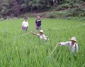 药检所:2012年中国生物农药出口排名