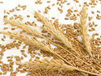 拜耳作物科学在法国开放新小麦育种设施
