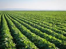 Brazil GM crop planted area to reach 40 million ha in 2013/14