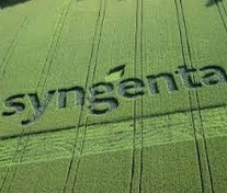 Syngenta launches plan to boost global production by 20%