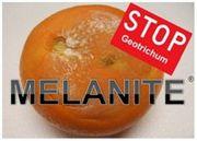 Decco Iberica presented new citrus fungicide