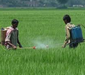 Manufacturing pesticide for export, export norms to be relaxed in India