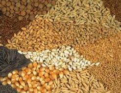 CropLife 100: The Return Of The Need For Seed