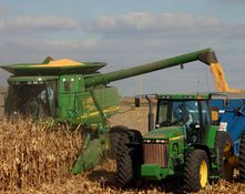 Corn production in Brazil forecasted to decrease by 8%