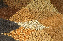 Global Seeds Market is Expected to Reach $72.09 Billion by 2020
