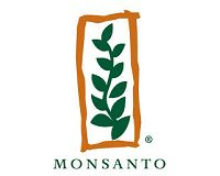 Monsanto not yet a big player of corn in China