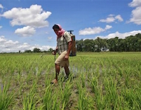 Sri Lanka bans use and sale of five pesticides