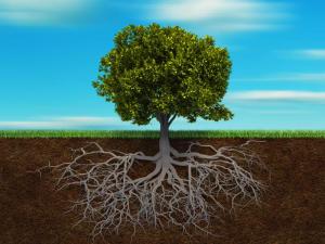 观察:国际新肥企业叩响中国市场大门