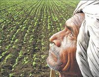 Indian farmers are charged exorbitant pesticide price due to illegal registrations and rules