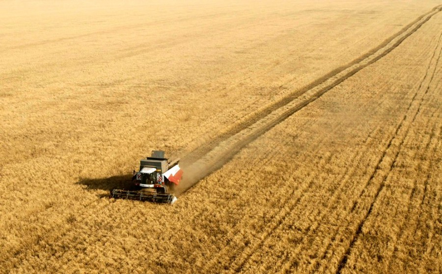 Dry weather affected Russian winter grains sowing
