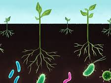 Global agri-microbials market to reach $5.07 bn by 2021