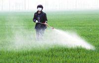 """市场出现""""酱油""""草铵膦产品?成本低廉 破坏土壤及作物根系"""