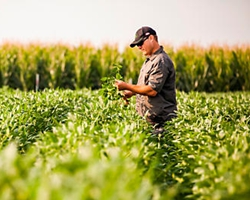 German crop protection market declined slightly in 2015