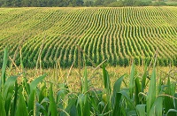Despite low crop prices, corporate and VC agtech investments soar