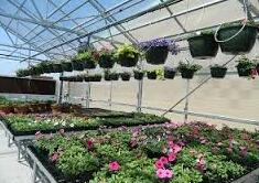 Bayer launches production ornamentals business