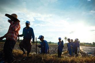 新农基谈缅甸市场开发:空间尚存  未来五年形成市场格局