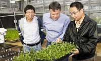University of Arkansas scientists use genetic tools to help U.S. spinach producers meet growing demand