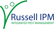 Track African fall armyworm with Russell IPM's optimised pheromone lure
