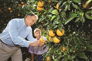 Bayer, Citrus Research and Development Foundation (CRDF) to find solutions against citrus greening
