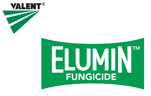 US approved Valent's Elumin™ Fungicide for Downy Mildew in Cucurbits