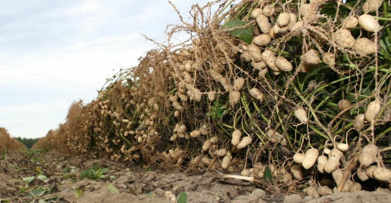 Peanut genetic code now mapped, ready to unlock plant's potential