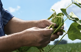 Bayer and Round Table on Responsible Soy renew cooperation