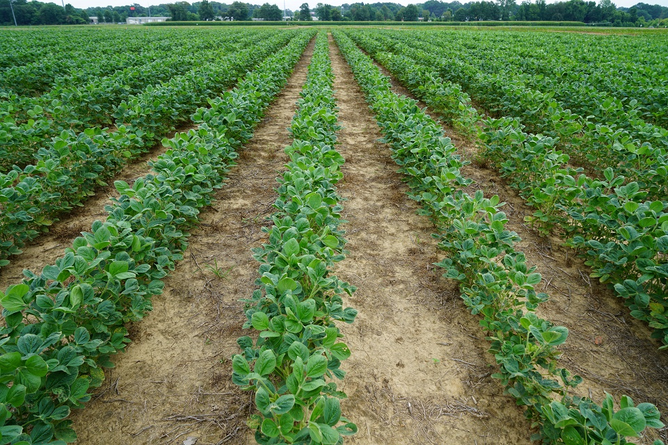 Dicamba stewardship training in US Tennessee - What applicators need to know about new mandatory training