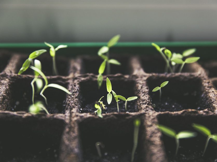 Will new regulations stifle innovation in plant and animal breeding?