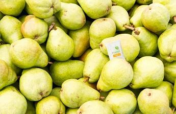 Hazel technologies completes pear trials with cornell university