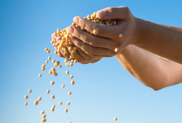 Brazil approves Monsanto's GM soy seed Intacta 2 Xtend