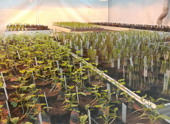 SGS offers novel plant molecular breeding and analysis services