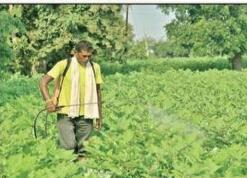 India: Agriculture department moots Glyphosate ban in Yavatmal